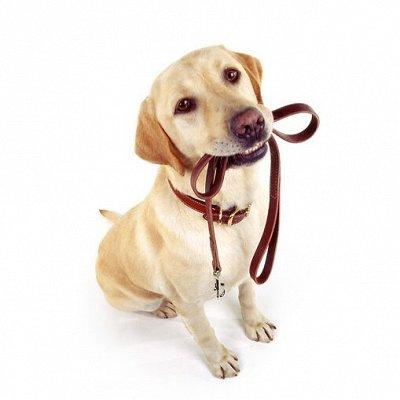Догхаус. Большая закупка зоотоваров  — Амуниция и вольеры для собак — Аксессуары и одежда