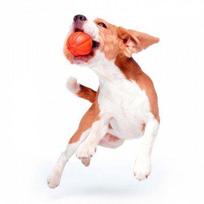 Догхаус. Большая закупка зоотоваров  — Игрушки для собак — Игрушки
