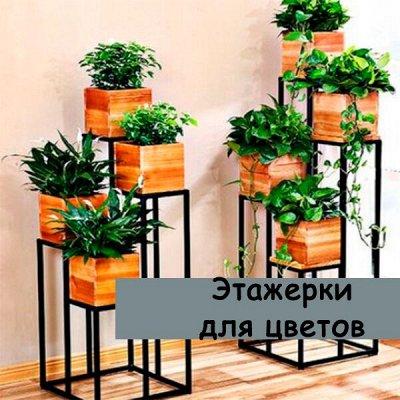 Наведем в шкафу порядок — Этажерки для цветов — Комнатные растения и уход