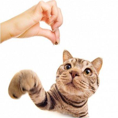 Догхаус. Большая закупка зоотоваров  — Лакомства для кошек — Лакомства и витамины