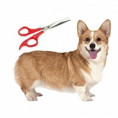 Догхаус. Большая закупка зоотоваров  — Груминг и пеленки для собак — Уход