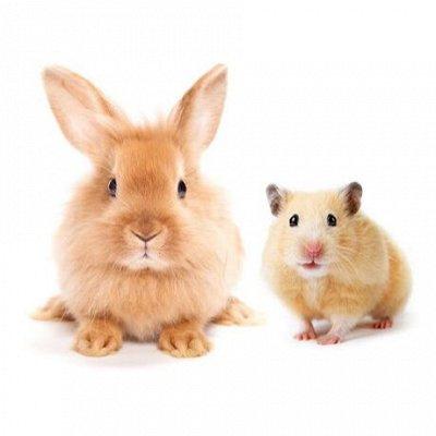 Догхаус. Большая закупка зоотоваров  — Корма, лакомства и гигиена для грызунов — Корма