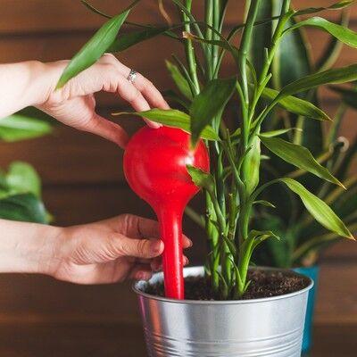 ❤❤❤Сад и Огород. Готовим Новый уДачный Сезон  ! ❤❤❤    — Автополив растений — Декоративноцветущие