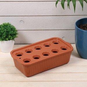 Лоток для выращивания зелёного лука, 29 ? 16 ? 8,5 см, 10 лунок, терракотовый