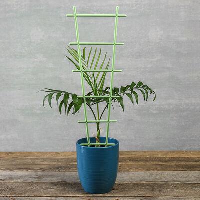 ❤❤❤Сад и Огород. Готовим Новый уДачный Сезон  ! ❤❤❤    — Для комнатных растений — Декоративнолистные