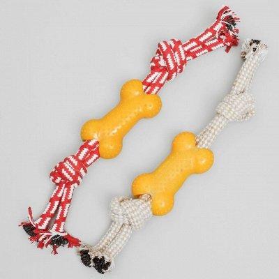 Пижон - для собак - 21 — Канатные игрушки — Аксессуары и одежда