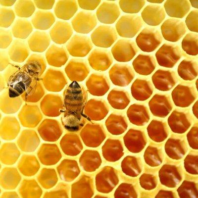Крымские травы 💥 Кизил, полынь, мелиса и много других трав — Мёд в сотах — Мед