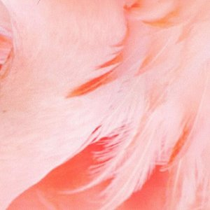 "Интерьерная наклейка ""Фламинго"" 60х90 см"