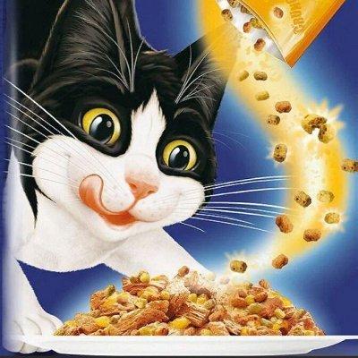Karmy - корм для собак и кошек премиум класса! Новинки! №20 — Корм для кошек и котят  Felix - побалуй своего любимца — Корма