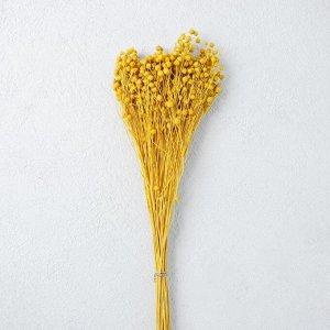 Сухоцвет «Абрус» набор 24 шт, цвет желтый