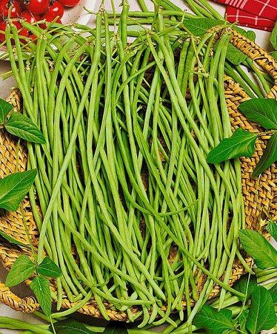 Дачный сезон! НЕ ПРОПУСТИ! Более 2000 видов семян!   — Семена Фасоли, Бабов — Семена овощей