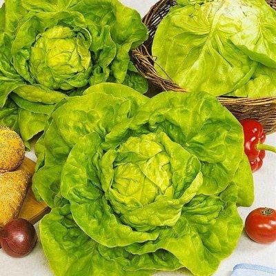 Семена от бегонии до петунии, а также семена овощей и зелени — Семена салатов — Семена овощей