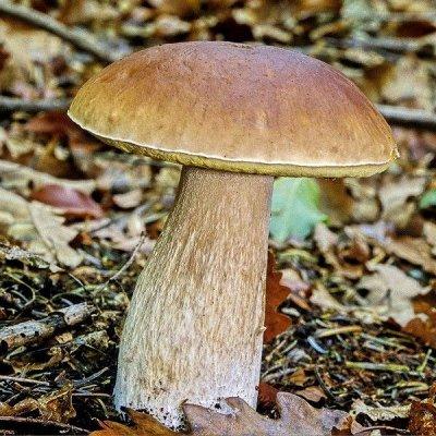 Семена от бегонии до петунии, а также семена овощей и зелени — Мицелий грибов — Семена овощей