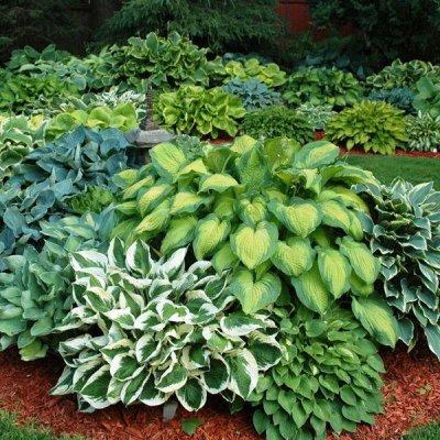 2000 видов семян для посадки!-48 Подкормки, удобрения. — Цветы многолетние — Семена многолетние