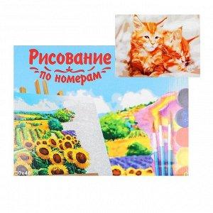 Картина по номерам на холсте 30 - 40 см, «Рыжие котята»