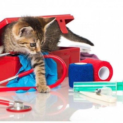 Зверьё Мое — корма, лакомства, аксессуары.  — Ветеринарные инструменты и расходные материалы — Для кошек