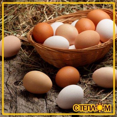 ☀ЗДОРОВЬЯ ВАШЕМУ ДОМУ☘Фермерские продукты☘Натурально!Вкусно! — ☘ЯЙЦА Фермерские (Куриные & перепелиные) — Яйца