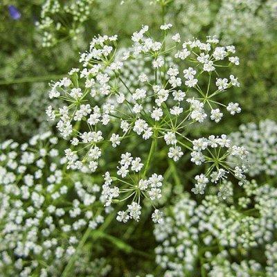 видов семян для посадки! Подкормки, удобрения — Аптека на грядке НОВОЕ