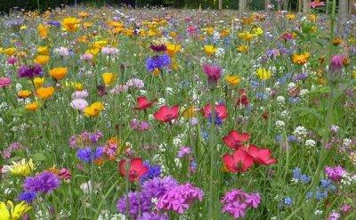 Дачный сезон! НЕ ПРОПУСТИ! Более 2000 видов семян! — Газон, сидераты — Семена газонных трав