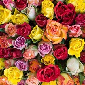 Роза микс в цветной упаковке