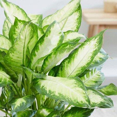 Хищный Sale! Огромный выбор комнатных растений!  — Декоративнолистные растения — Декоративнолистные