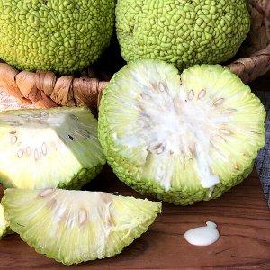 Маклюра плод (Адамово яблоко)  (сентябрь-ноябрь, для приготовления настойки и мази) 1 шт