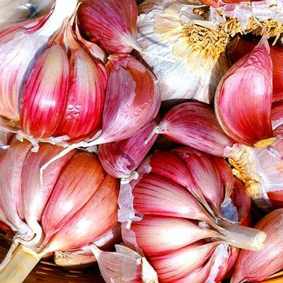 Огромная распродажа семян! +Предзаказ крутого чеснока и лука