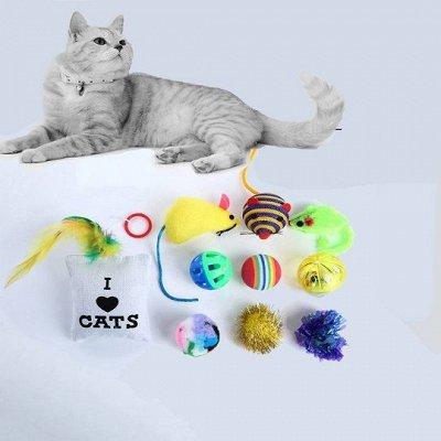 Мир упаковки - для всех. Акция на туалетную бумагу!  — Игрушки для кошек — Игрушки