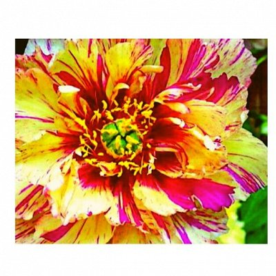 7 цветов! Свободные! Добавлено наличие
