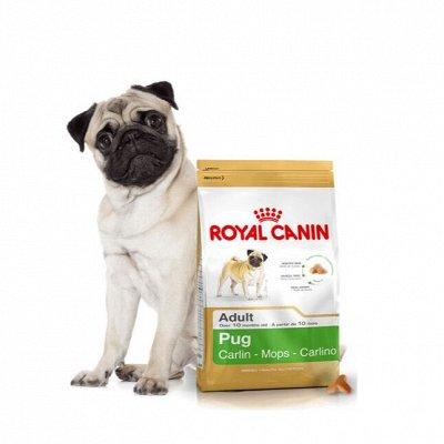 Догхаус. Акция Royal Canin  - 40% скидки!  — Сухие корма для собак — Корма