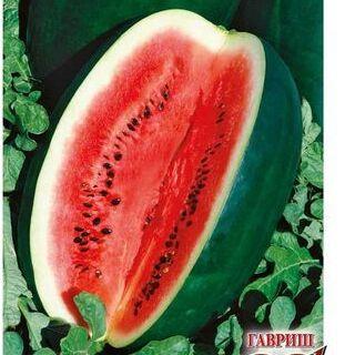 Товары на любой вкус и кошелек Актуальное наличие — ОВОЩИ: АРБУЗ, БАКЛАЖАН, БОБЫ, ДЫНЯ — Семена овощей