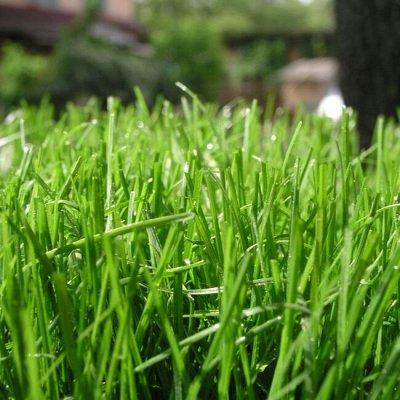 Предзаказ: Луковичные и Саженцы — ГАЗОННАЯ ТРАВА — Семена газонных трав