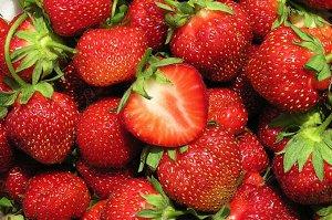 Кент Фото из интернета Цена за 1 укорененный куст.ЗКС. Кент — клубника раннего срока поспевания. Собирать сладкие ягоды можно, начиная с первой половины июня. Но плодоношение растянутое, поэтому сбор