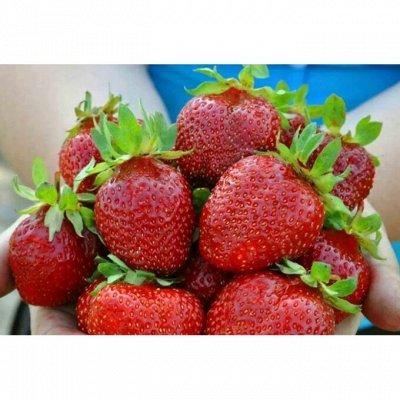Клубника_на осень_Предзаказ — Среднеранние и среднепоздние сорта(ЗКС) — Плодово-ягодные