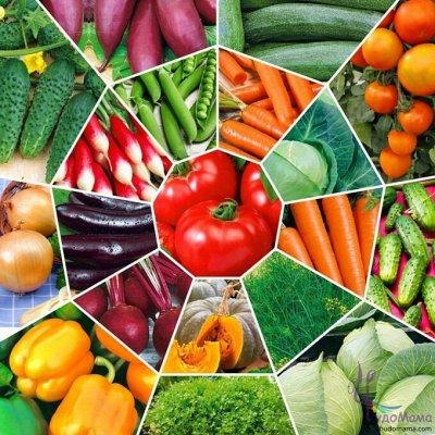 🏡Семена ☘ + Микрозелень + Удобрения — Семена Johnsons (Великобритания) * Овощи и Зелень — Семена овощей