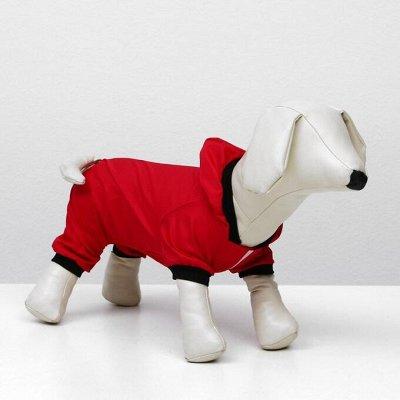 Пижон - для собак - 21 — Комбинезоны — Аксессуары и одежда