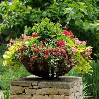 🌴 Искусственные растения, 🌳 флористика, 🌸 фитодизайн — Декоративные вазоны-клумбы — Декоративноцветущие
