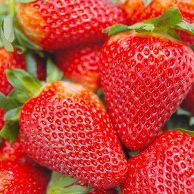 Клубника_на осень_Предзаказ — Ремонтантные сорта  — Плодово-ягодные