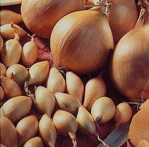 Лук и чеснок - осень 2020 (свободное в счете) — Лук, лук-шалот — Семена овощей