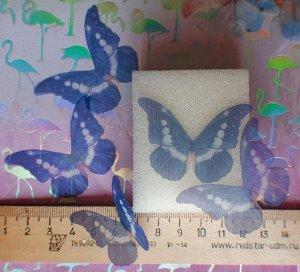 Бабочка большая 05