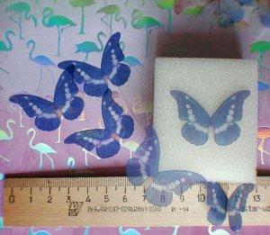 Бабочка средняя 05