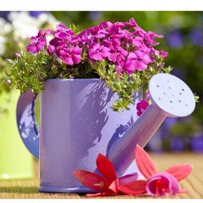 🏡Семена ☘ + Микрозелень + Удобрения — Семена Johnsons (Великобритания) цветы — Семена цветов