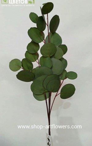 Эвкалипт Populus.Искусственные растения