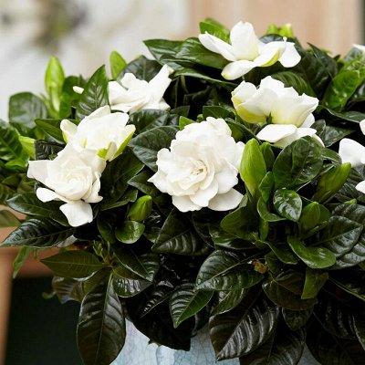 Комнатные растения! Большое поступление кактусов! — Декоративноцветущие — Комнатные растения и уход