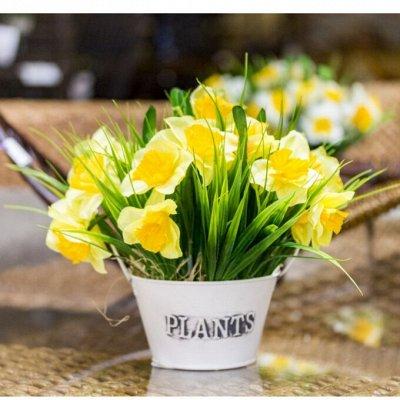 Цветочные луковицы посадка Осенью* В наличии — Нарциссы — Семена двулетние