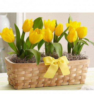 Цветочные луковицы посадка Осенью* В наличии — Тюльпаны...махровые, зеленоцветные, ранние и поздние.РАЗНЫЕ — Семена многолетние