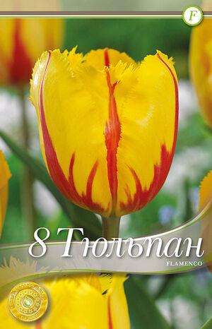 Тюльпан Фламенко