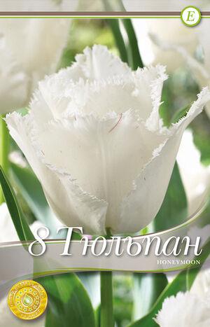 Тюльпан Ханимун