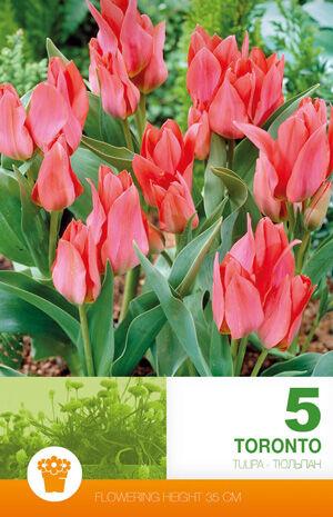 Цветочные луковицы  Осень 2021 * Оплата 50/50 — Тюльпаны Эконом — Семена двулетние
