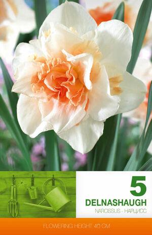 Цветочные луковицы  Осень 2021 * Оплата 50/50 — Нарциссы Эконом — Семена однолетние